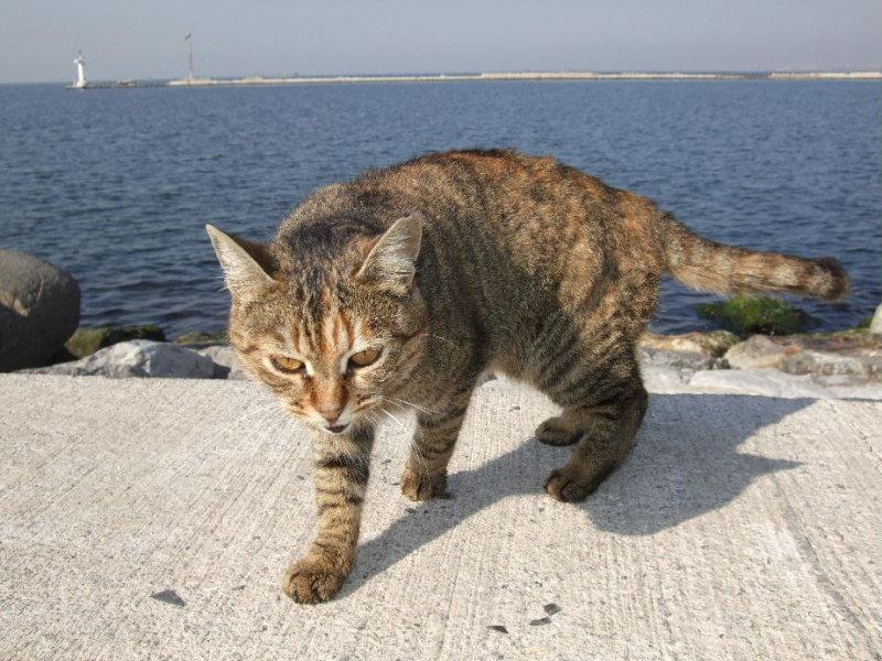 Izmir harbor cat, personality 1