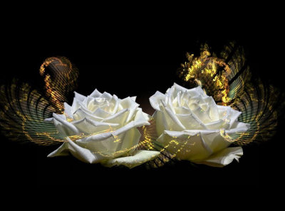 White roses with a touch...