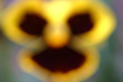 Pansy Face.jpg