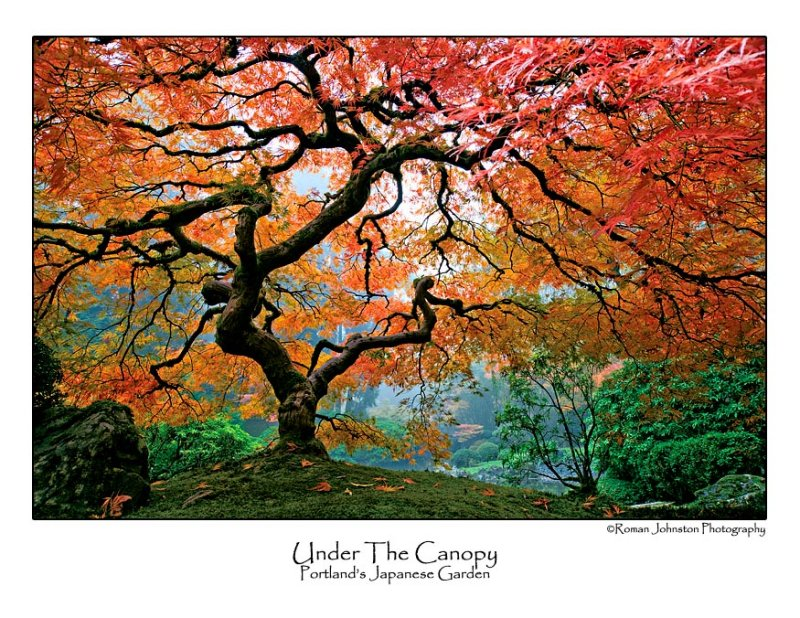 Under The Canopy.jpg  (Up To 30 x 45)
