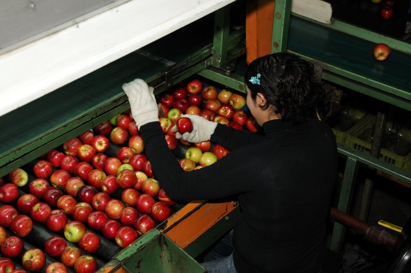 Apple packing plant