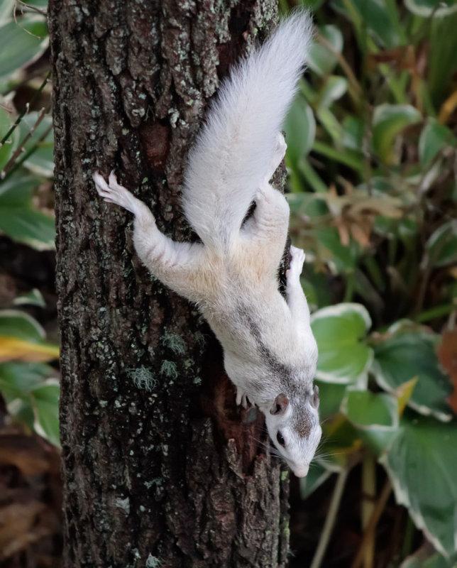 _MG_6216 Squirrel Hybrid - ISO 3200