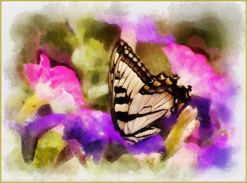 Butterfly and Petunias
