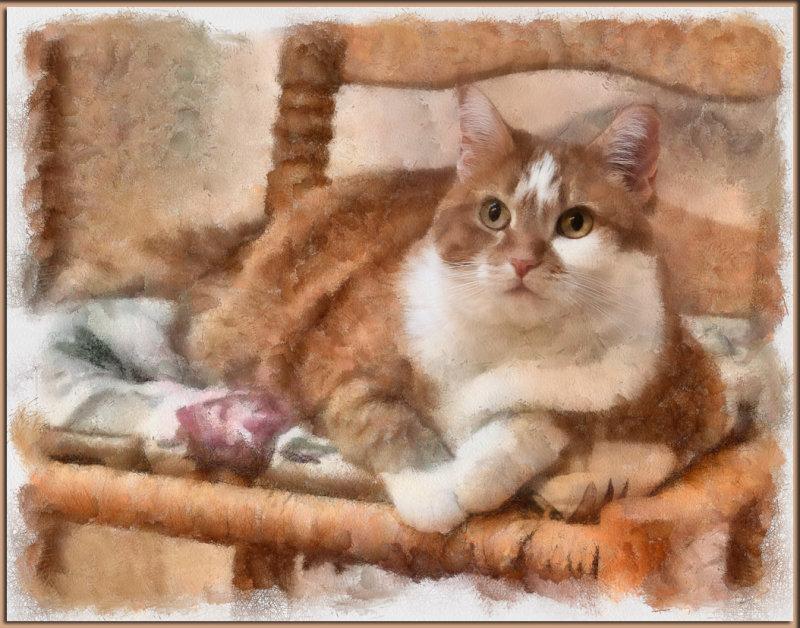 _MG_4678 Beegie On Bedroom Chair