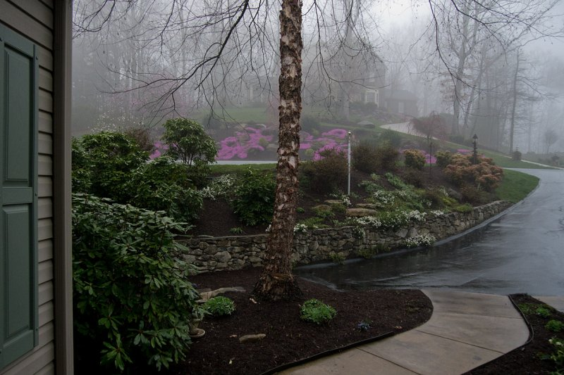 P1030261 Rainy Morning