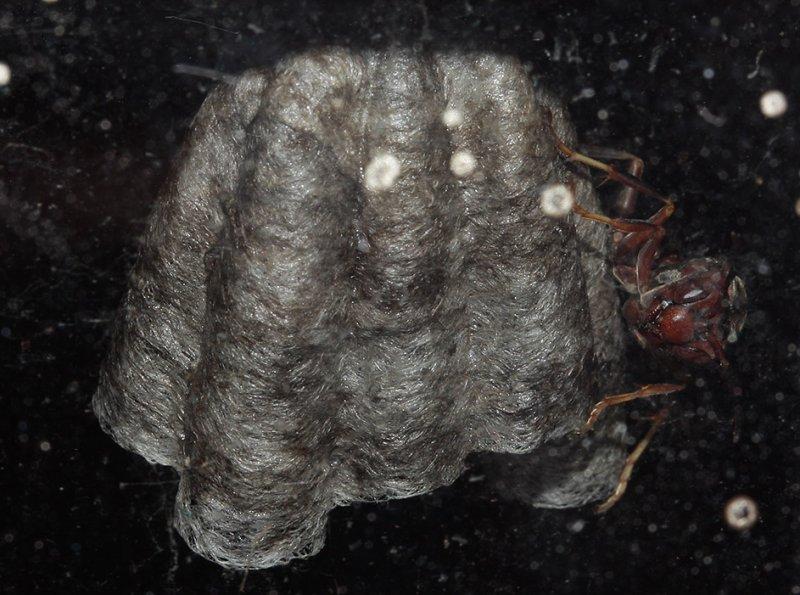 _MG_2671 Hornet Nest