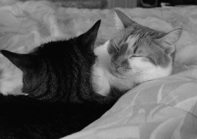 Quiet Cuddling