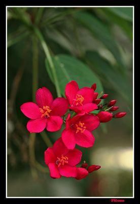 Red Macro.jpg