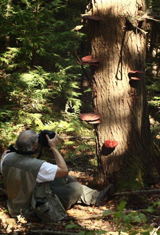 Joe photographing Ganoderma lucidum (Hemlock Varnish Shelf)