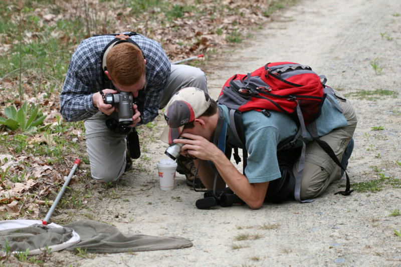 Tom and Cliff photographing their first lintneri
