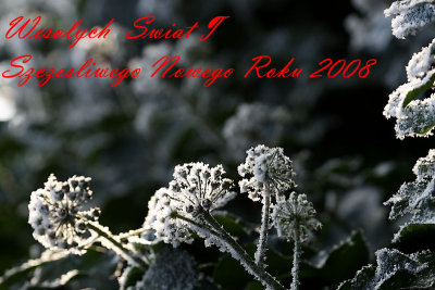 Merry Christmas & Happy New Year to My Polish Friends!!