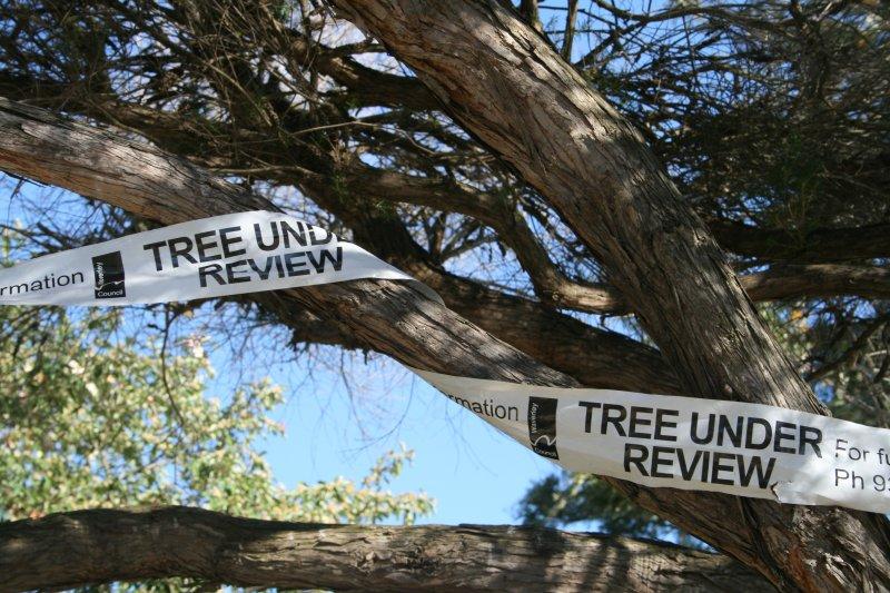 Tree bureaucracy