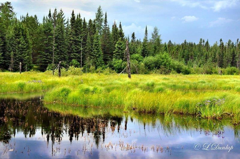 70.5 - Baptism River:  Iris Bog On The Sawbill Trail