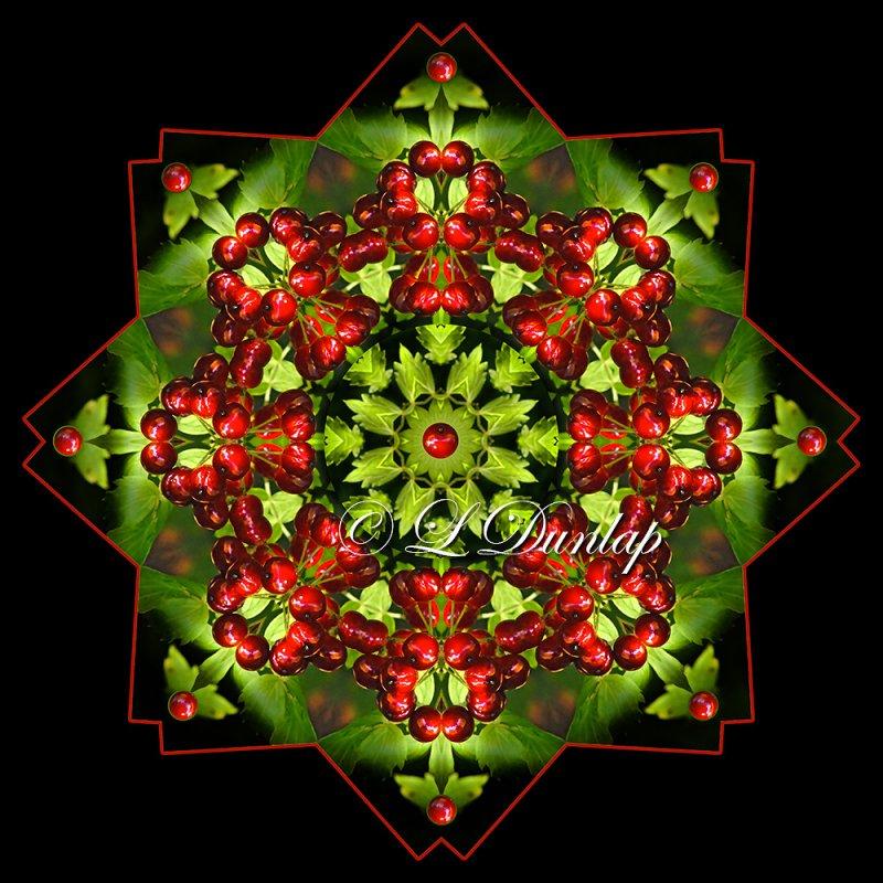 Baneberry 1 -- Northwoods Kaleidoscope