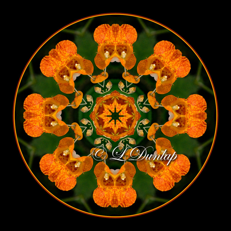 Jewelweed 2 -- Northwoods Kaleidoscope