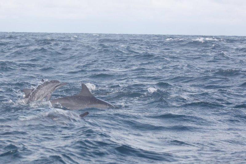 Dolphin (43).JPG