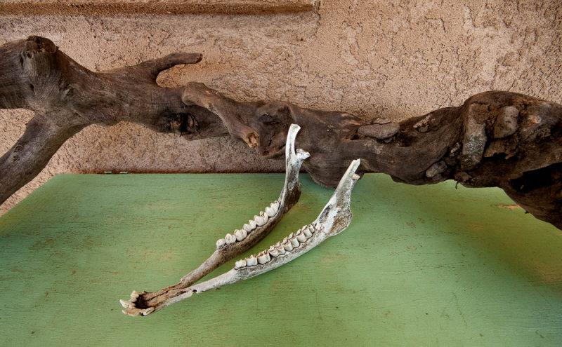 Jaw Bone 0864