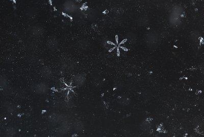 Snowflake Universe