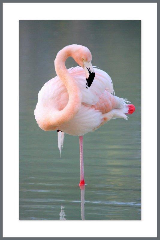 Les plus beaux oiseaux du monde photo l o photos at for Les plus beaux bureaux design