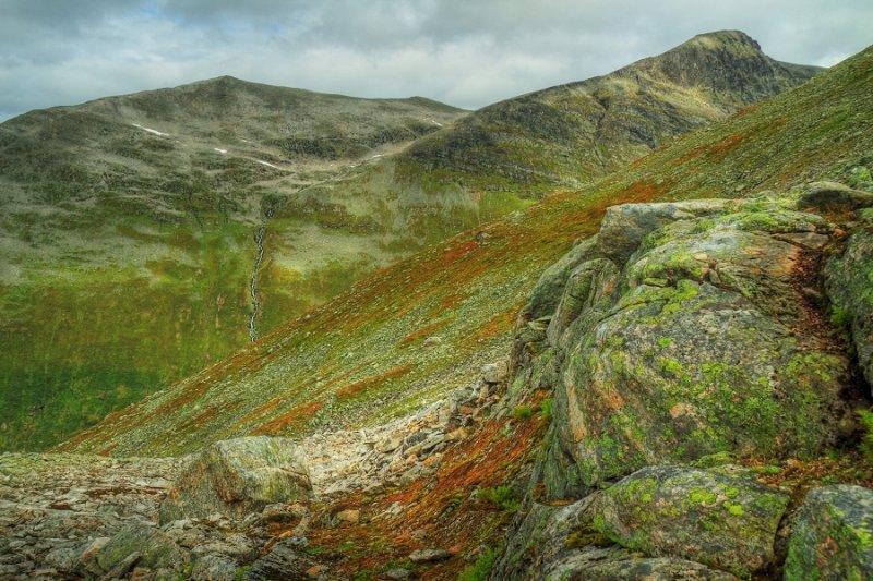 Rock, moss & lichen - Vesleskala (1240m)