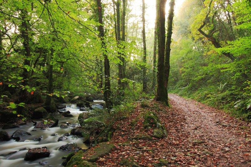 Autumn path & stream