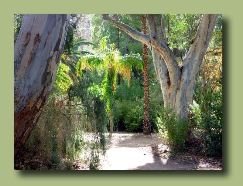 Amid the Eucalyptus