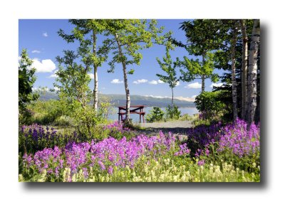 Cottonwood RV Park  Campground Colours