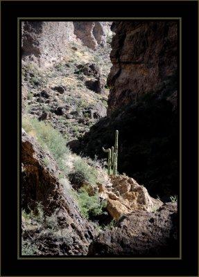 Saguaro Guard