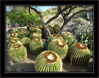 Alien Seed Pods