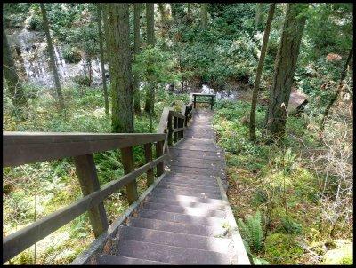 Cabin Trail 3