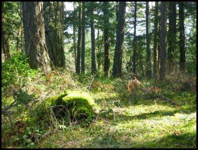 Cabin Trail 4