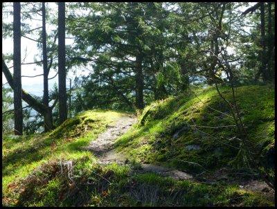 Pickles' Bluff Trail 7