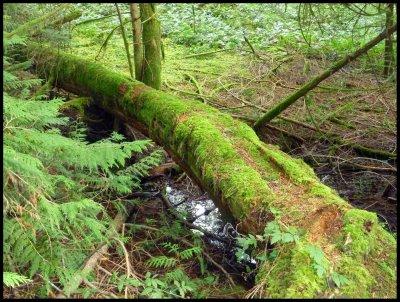 Slektain Trail 6