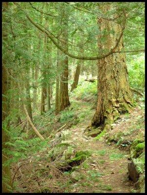 Montfort Trail 2