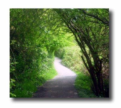 Rithet's Bog Trail