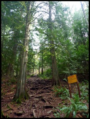 Mt. Finlayson Climb 3
