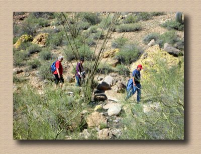 Hiking Amidst the Ocotillo and Palo Verde