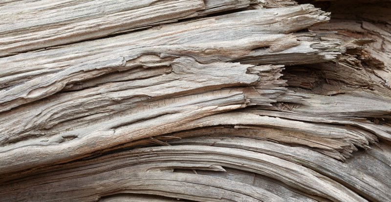 Cracked Cedar