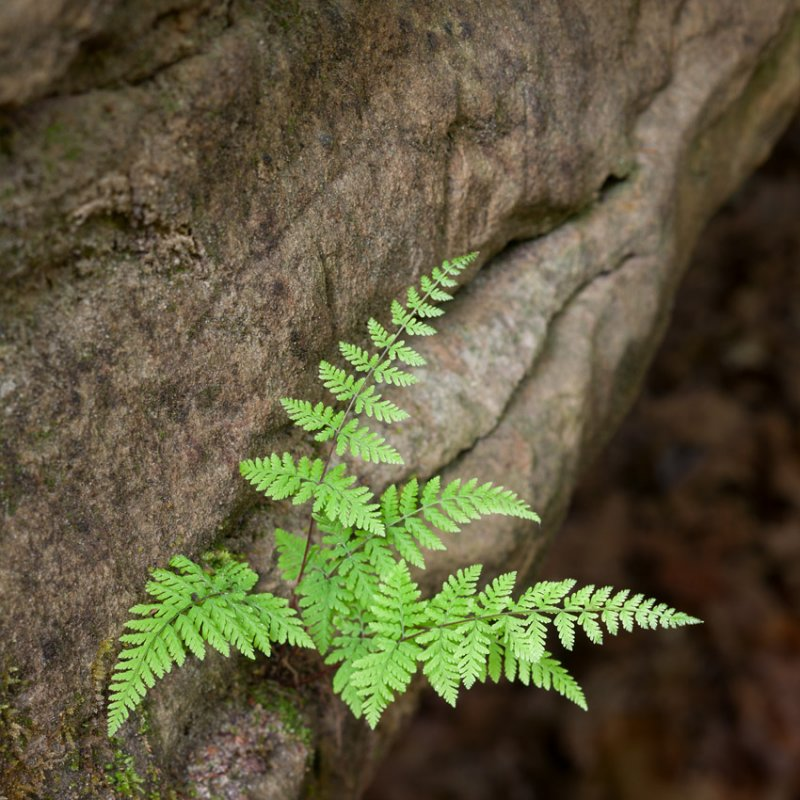 Fern and Sandstone