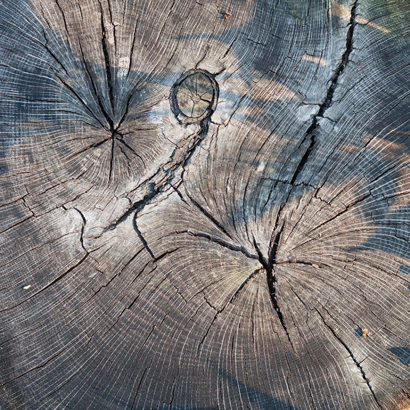 Old Stump Top