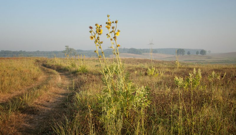 Compass Plant and Road