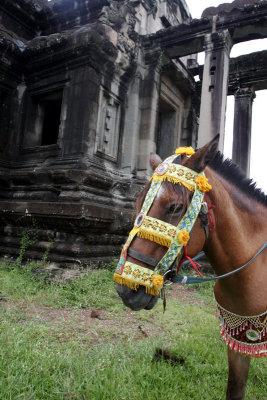 Horse with Elaborate Halter 493.jpg