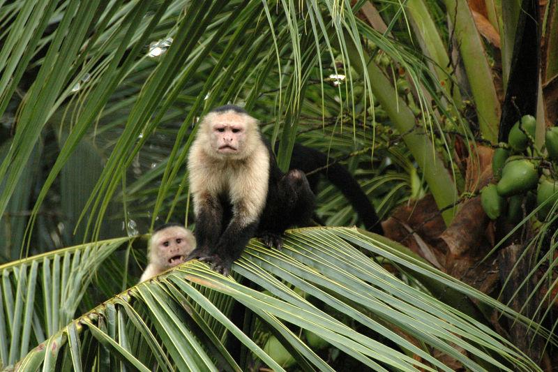 Hostile Monkeys