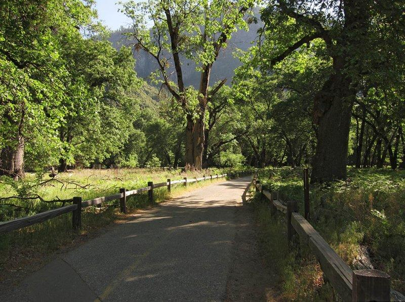 On path to Lower Yosemite Falls.  Odd to see missing ground layer. # 4154