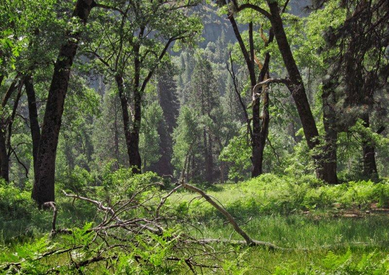 Cooks Meadow on May 24  vs <a href=http://bit.ly/ywinter target=_blank><u>March 15</u></a>. -#4176