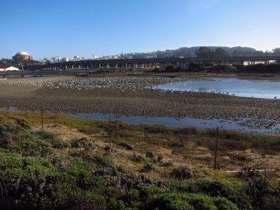 Restored marsh lands 3135