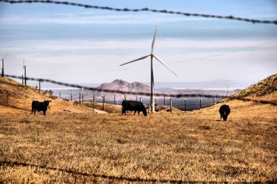 June 4- Cattle Ranch/Wind Farm