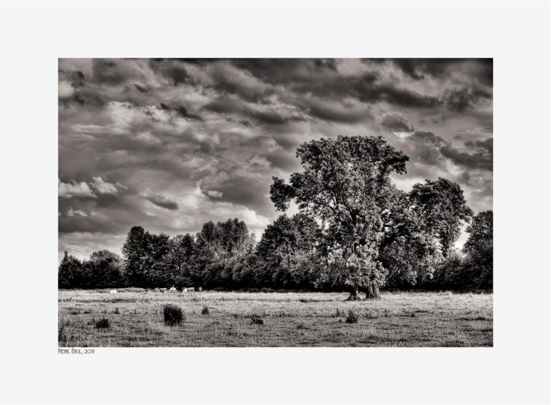 Trees, Cows and Clouds