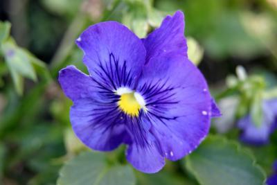Flower100004_1.jpg