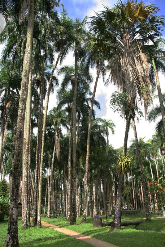 The Palm Garden  -  De Palmentuin